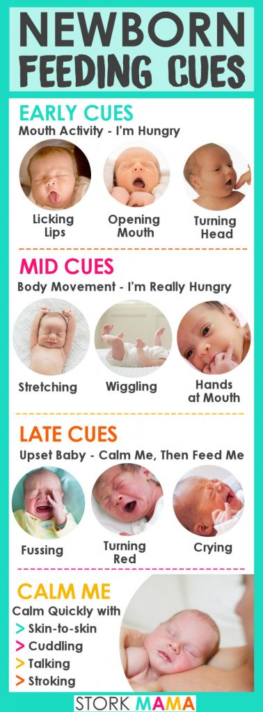 Newborn Feeding Cues   Learn when your baby is hungry. This helps new moms learn to feed your baby on demand. Stork Mama