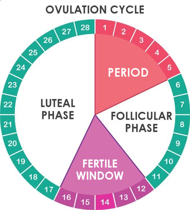 ovulation cycle tracking basics beginners guide when ttc stork mama. Black Bedroom Furniture Sets. Home Design Ideas